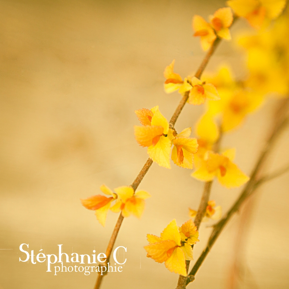 nature-pintemps-2015-4-carre-jaune-s