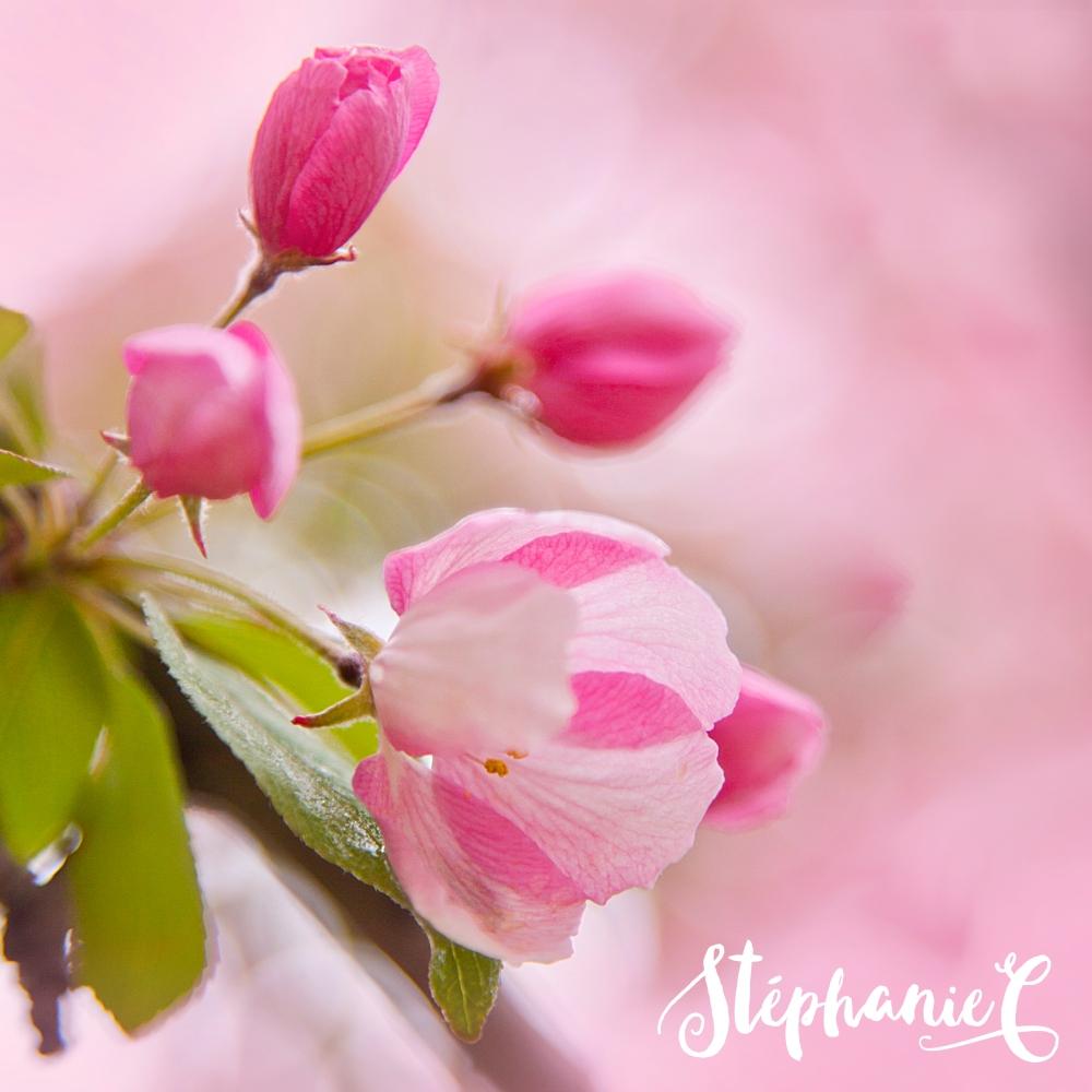 printemps-macro-2016-155-carre-web